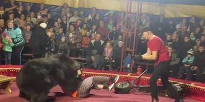 Urso de circo ataca adestrador durante apresentação na Rússia; assista