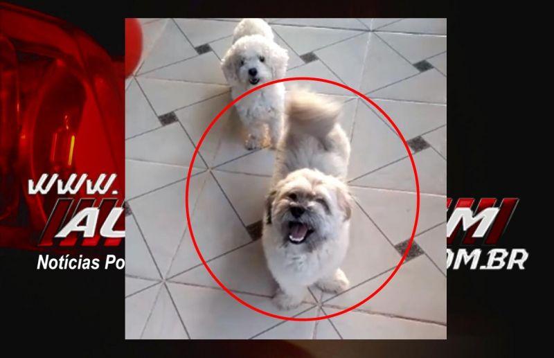 Rolim de Moura – Procura-se por cachorro, que desapareceu no Bairro Centenário