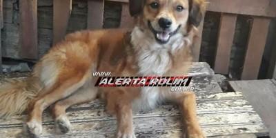 Rolim de Moura – Procura-se por cachorro que desapareceu no Bairro Boa Esperança