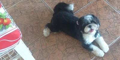 Rolim de Moura - Família está a procura de cadela que desapareceu no Bairro Beira Rio