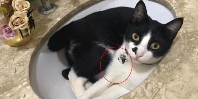 Rolim de Moura – Família está à procura de gato que desapareceu no Bairro Beira Rio