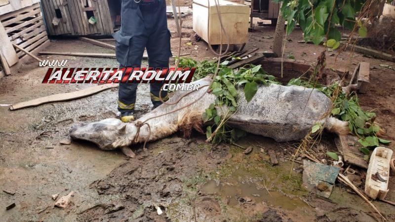 Rolim de Moura – Cavalo morre após cair em fossa com tampa de madeira e bombeiros são acionados – Assista ao vídeo da retirada do animal