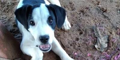 Rolim de Moura – Família procura por cachorrinha desaparecida