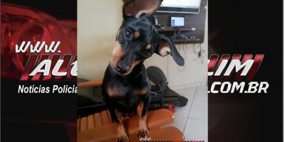 Rolim de Moura – Procura-se por cachorro perdido no último sábado