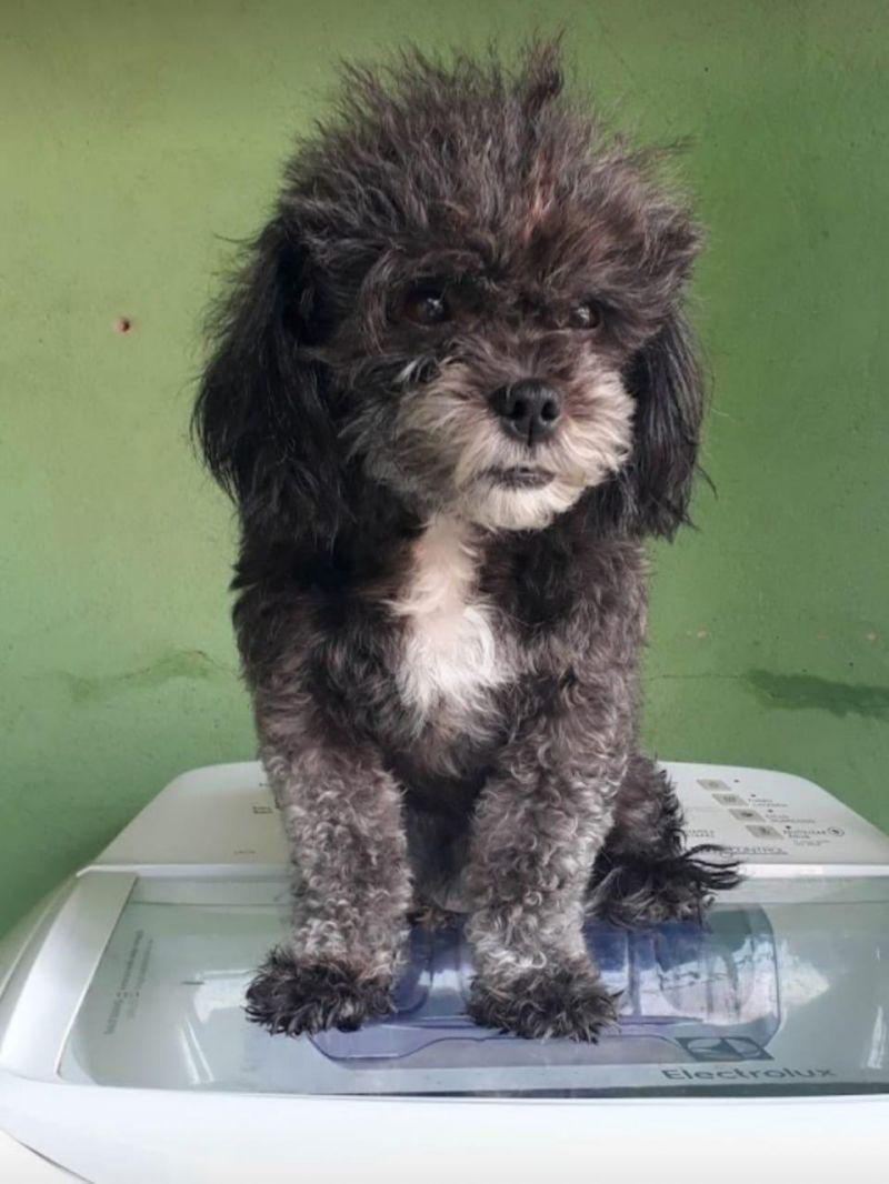Procura-se por cadela que desapareceu no Bairro Planalto, em Rolim de Moura