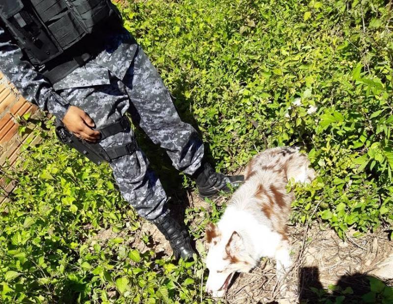 PMRO no combate ao tráfico de drogas, em Cacoal