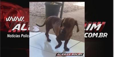 Procura-se por cachorro da raça Basset, que desapareceu no Bairro Olímpico, em Rolim de Moura