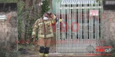 Quatro pessoas são hospitalizadas e dois cachorros morrem em ataque de abelhas no Setor 04, em Ariquemes