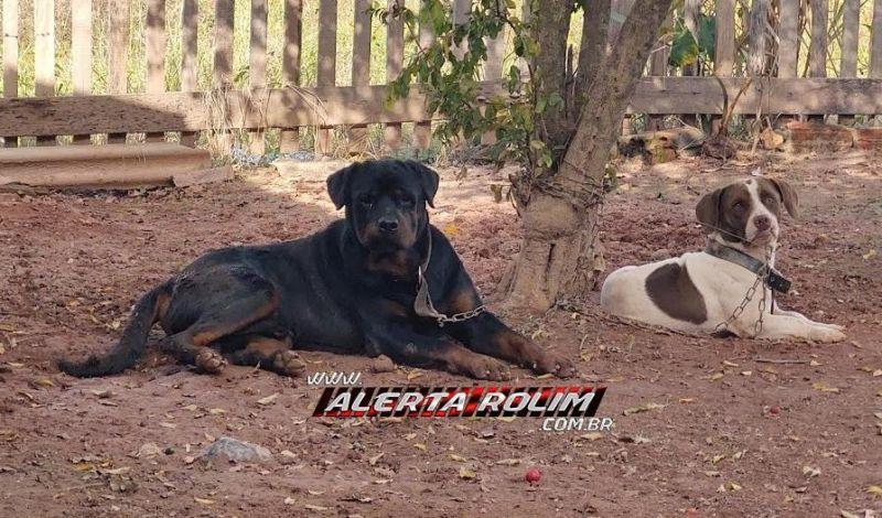 Família pede ajuda para encontrar dois cães, que pertencem a uma criança e desapareceram em Rolim de Moura