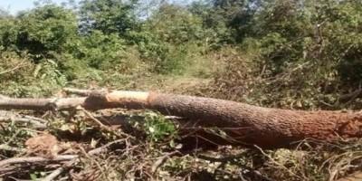 Filho presencia pai morrendo esmagado durante derrubada de árvore na BR-319, em RO