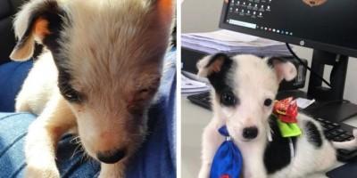 Polícia Civil resgata 80 cachorros que viviam em situação de maus-tratos durante operação Salve Patinhas, em RO