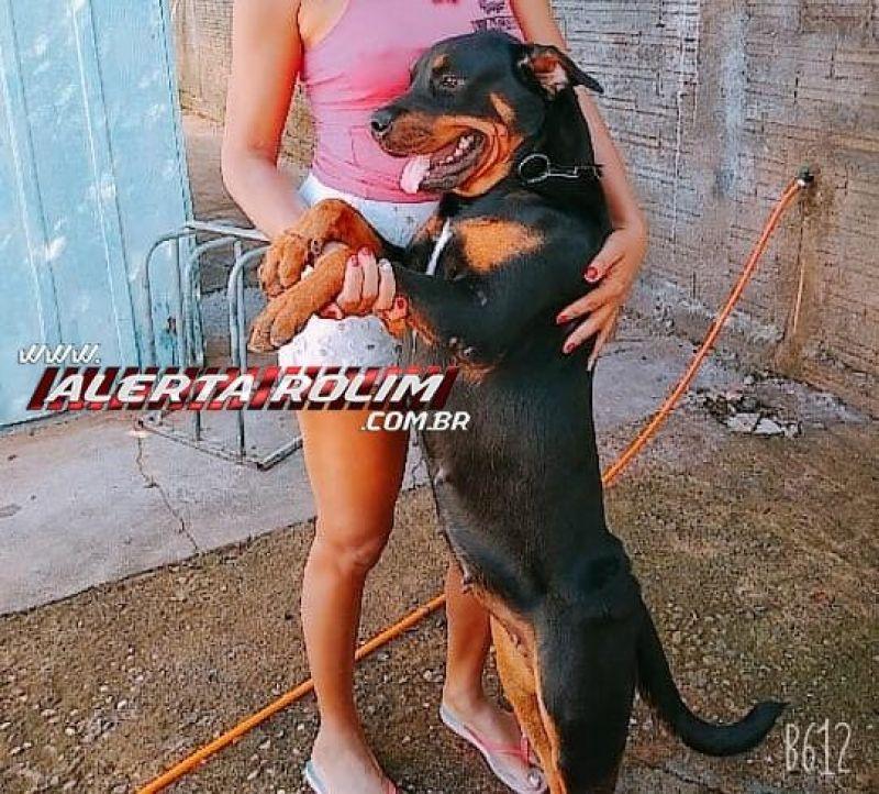 Procura-se por cadela que desapareceu no Bairro Olímpico, em Rolim de Moura