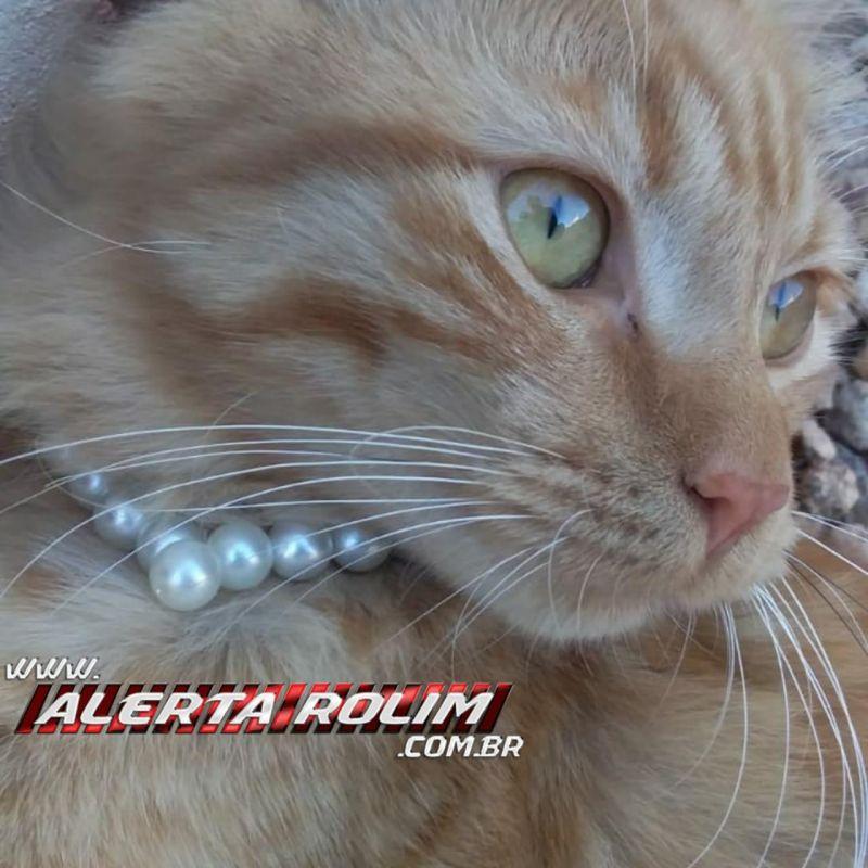 Procura-se por gata, de cor amarela, que desapareceu no Bairro Cidade Alta, em Rolim de Moura