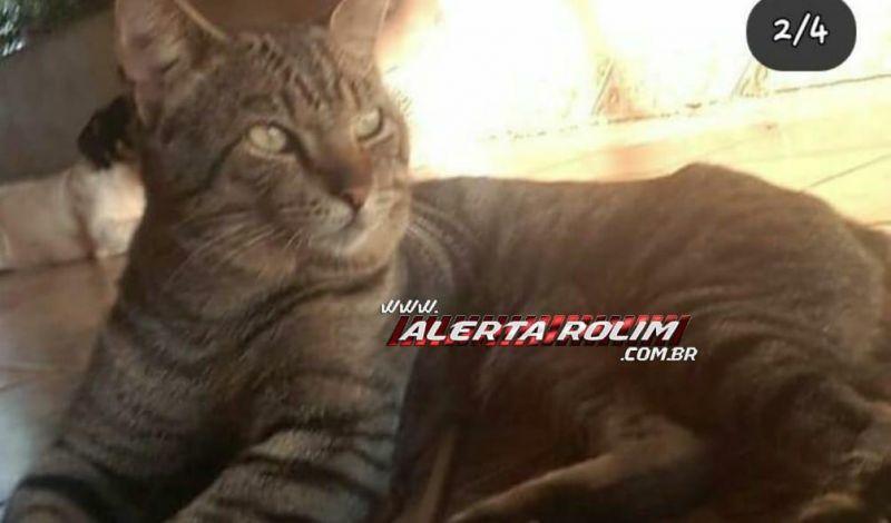 Procura-se por gato que desapareceu em Rolim de Moura