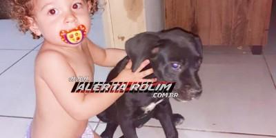 Família procura por cachorra da raça Box, que desapareceu no Loteamento Jequitibá, em Rolim de Moura