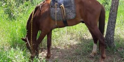 Jovem cai de cavalo, quebra pescoço e morre em Costa Marques