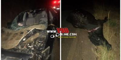 Três pessoas ficam feridas após carro bater em vaca na zona rural de Alta Floresta