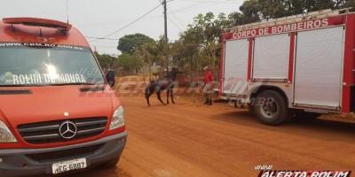 Bombeiros resgatam cavalo de dentro de fossa no bairro boa esperança em Rolim de Moura