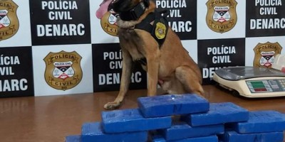 Traficante passa por abordagem na BR, mas é preso após ação de cão farejador, em RO