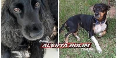 Proprietária oferece gratificação para encontrar cadelas que desapareceram no Centro de Rolim de Moura