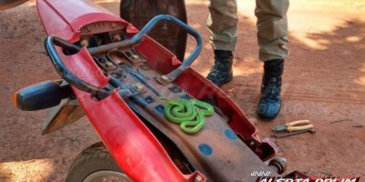 Cobra é capturada embaixo do banco de uma motocicleta no bairro Beira Rio em Rolim de Moura