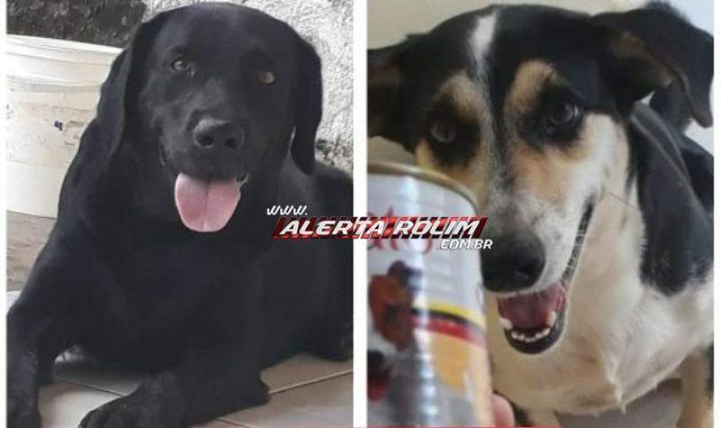 Procura-se por dois cães, que desapareceram no Bairro Jequitibá em Rolim de Moura