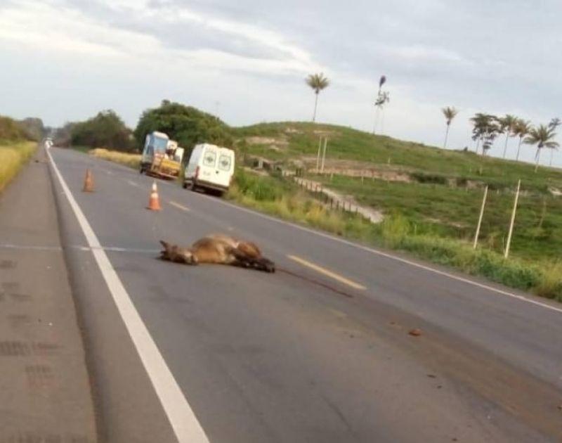 Quatro pessoas de Pimenteiras morrem em grave acidente na BR-364 próximo ao Guaporé