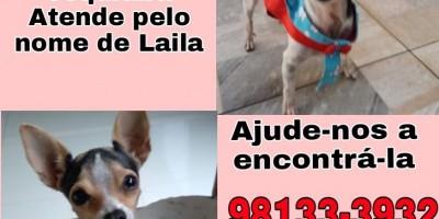 Proprietária oferece gratificação para encontrar cadela que desapareceu no Jequitibá, em Rolim de Moura