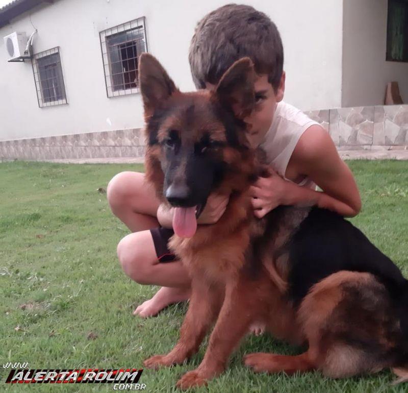 Procura-se e oferece recompensa por cadela da raça Pastor Alemão, que desapareceu em Rolim de Moura