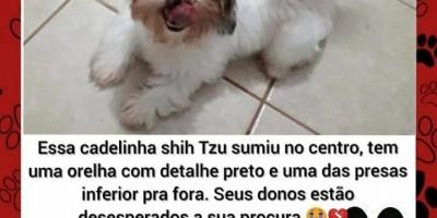 Procura-se e oferece recompensa por cachorrinha da raça Shih Tzu, que desapareceu em Rolim de Moura