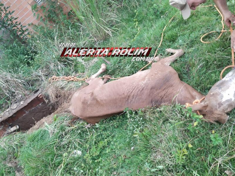 Bombeiros resgatam cavalo que estava dentro de fossa no Bairro Centenário em Rolim de Moura