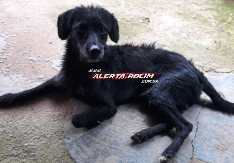 Procura-se por cachorro, que despareceu desde o último domingo em Rolim de Moura