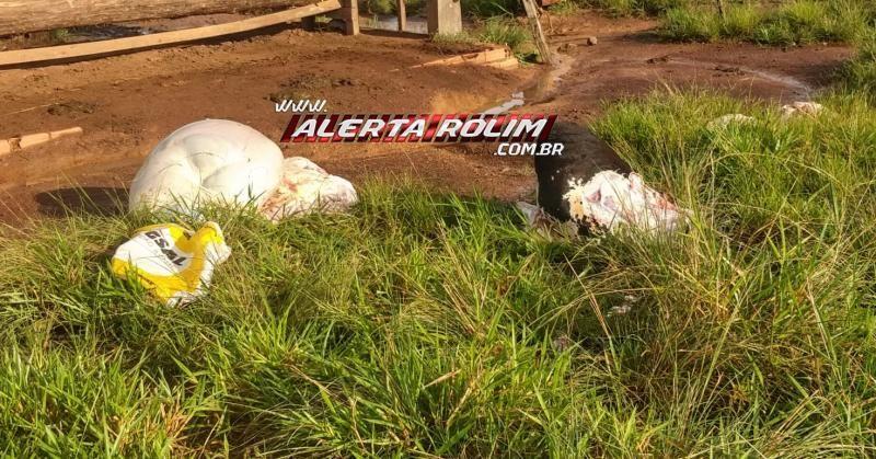 Vaca leiteira é abatida e carneada em propriedade rural na linha 182 em Rolim de Moura