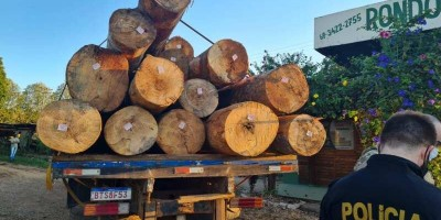 Operação 'Wood Land' da PF combate crimes ambientais e comercialização de madeira ilegal de terras indígenas