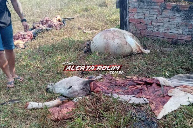 02 vacas foram abatidas, carneadas e furtadas por criminosos em propriedade rural, na Linha 188 em Rolim de Moura; assista ao vídeo