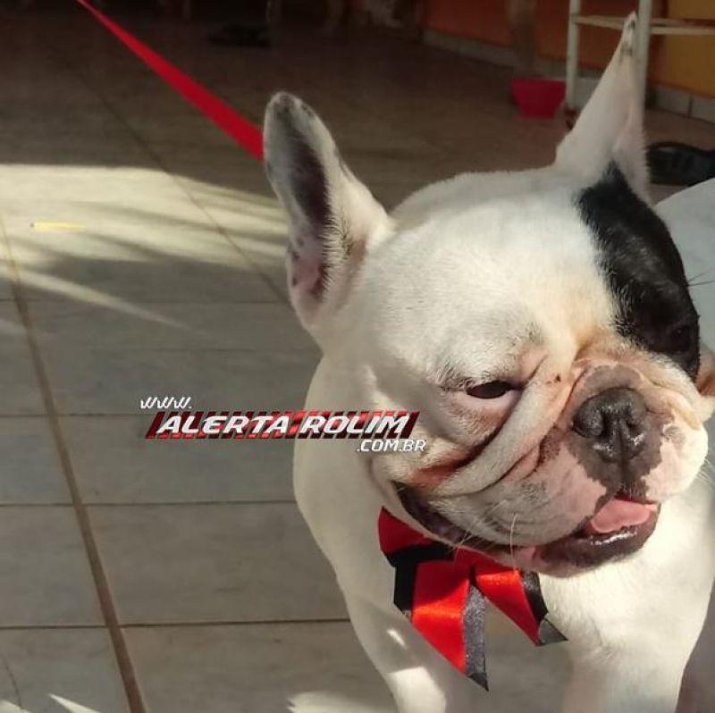 Cachorro é encontrado no bairro São Cristóvão em Rolim de Moura e procura-se por proprietário