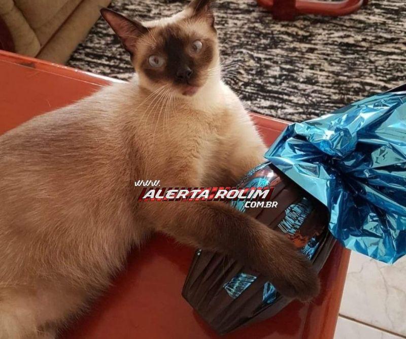 Familiares oferecem mil reais de recompensa por gato que desapareceu em Rolim de Moura