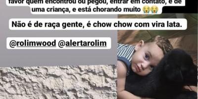 Procura-se por filhote de cachorro pertencente a uma criança que se perdeu no bairro Beira Rio em Rolim de Moura