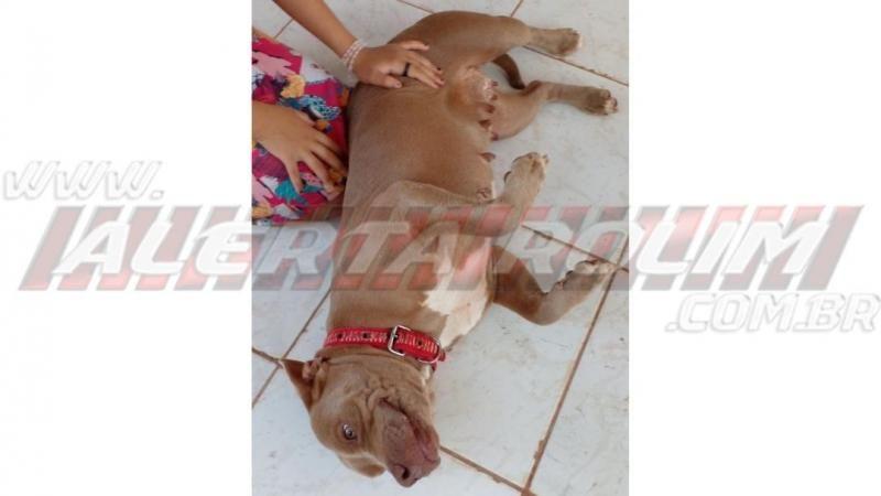 Utilidade Pública: Procura-se cachorra perdida a mais de duas semanas no bairro Beira Rio em Rolim de Moura