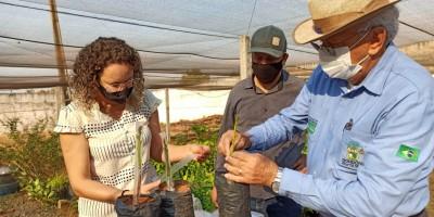 Vice-Governador José Jodan incentiva novas culturas para a Agricultura Familiar do Estado de Rondônia