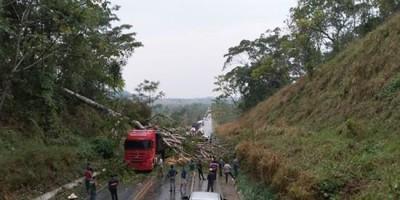 Árvore cai, atinge veículos e deixa BR-364 interditada entre Jaru e Ariquemes