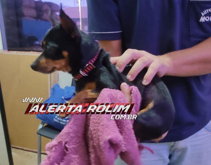 Cachorro da raça Pinscher é encontrado em Rolim de Moura e procura-se pelo proprietário