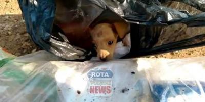 COVARDIA: Garis encontram cachorrinho dentro de saco de lixo 17 em Vilhena; assista ao vídeo