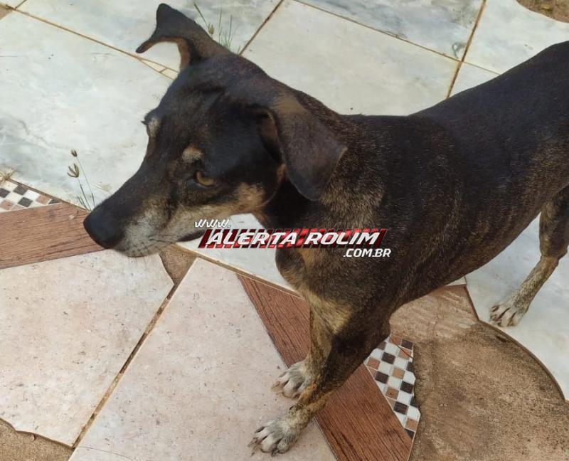 Cachorra apareceu em uma residência, no bairro São Cristóvão em Rolim de Moura e procura-se pelo proprietário do animal