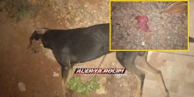 Criança de 05 anos se emociona ao encontrar seu cachorro de estimação morto, possivelmente por envenenamento em Rolim de Moura - Vídeo